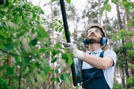Photo for Smiling gardener in helmet, protective glasses and hearing protectors trimming trees with telescopic pole saw in garden - Royalty Free Image