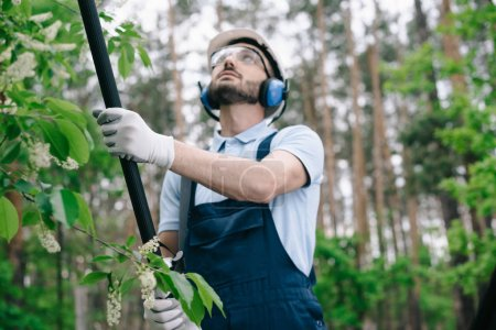 Photo for Attentive gardener in protective glasses and hearing protectors trimming trees with telescopic pole saw in garden - Royalty Free Image