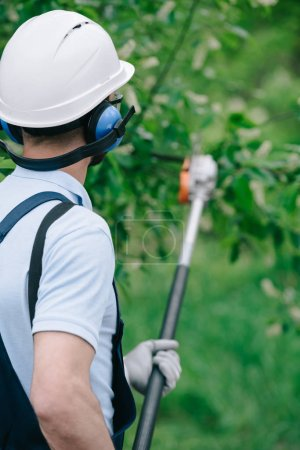 Photo for Back view of gardener in helmet and earmuffs trimming trees with telescopic pole saw in park - Royalty Free Image