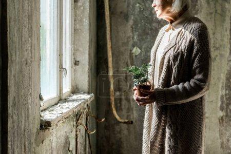 Photo pour Vue recadrée de la femme âgée tenant une petite plante en pot - image libre de droit
