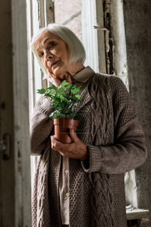 Photo for Selective focus of senior woman holding plant in room near windows - Royalty Free Image