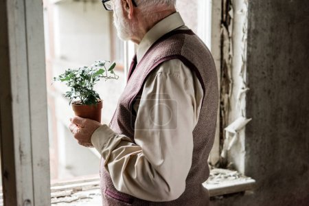 Photo for Cropped view of retired bearded man holding plant - Royalty Free Image