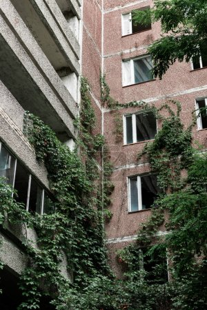 Photo for Low angle view of abandoned building with overgrown green leaves in chernobyl - Royalty Free Image