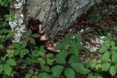 """Постер, картина, фотообои """"накладные вид сожгли куклу ребенка возле зеленых листьев и ствола дерева в Чернобыле"""""""
