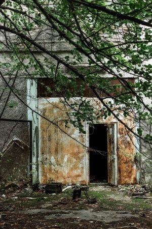 Photo pour Foyer sélectif des brindilles avec des feuilles vertes près du bâtiment abandonné dans tchernobyl - image libre de droit