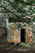 """Постер, картина, фотообои """"селективный фокус веток с зелеными листьями возле заброшенного здания в Чернобыле"""""""