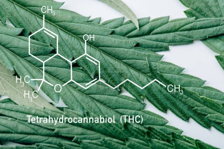 close up view of medical marijuana leaf on white background with thc molecule illustration