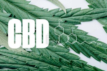 Photo for Close up view of medical marijuana leaf on white background with cbd molecule illustration - Royalty Free Image