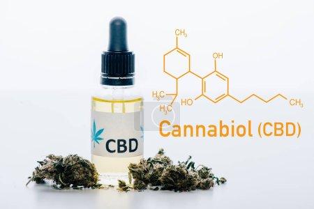 Photo for Cbd oil in bottle near medical marijuana buds isolated on white with cbd molecule illustration - Royalty Free Image
