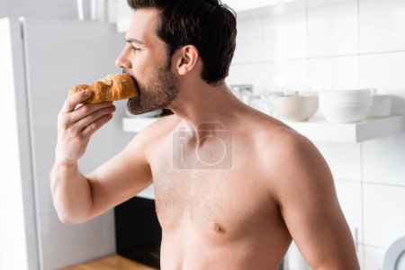handsome shirtless man eating croissant on kitchen in morning
