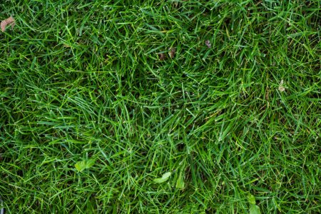 Top view of green grass on meadow