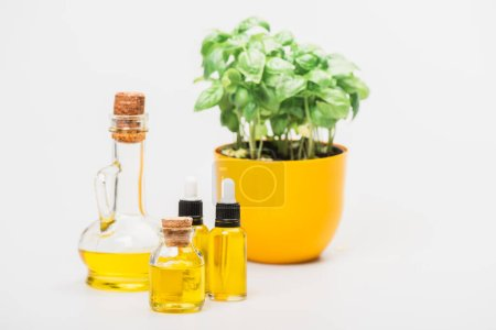 selective focus of green plant in flowerpot near essential oil in glass bottles on white background, naturopathy concept