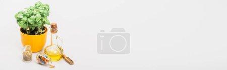 Photo pour Plan panoramique de plante verte en pot de fleurs près de pilules en bouteilles de verre et d'huile essentielle sur fond blanc, concept de naturopathie - image libre de droit