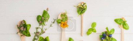 Photo pour Plan panoramique d'herbes et de feuilles vertes dans des cuillères près des fleurs sur fond de bois blanc, concept de naturopathie - image libre de droit