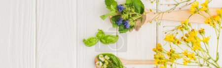 Photo for Panoramic shot of herbs and green leaves in spoons near flowers on white wooden background, naturopathy concept - Royalty Free Image