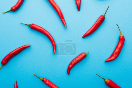 top view of spicy red chili peppers on blue background