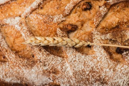 close up view of fresh baked bread loaf with spikelet