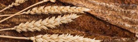 Nahaufnahme von frisch gebackenem Brot mit Stacheln, Panoramaaufnahme