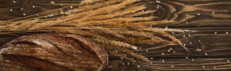 Photo pour Vue de dessus du pain frais cuit au four avec des épillets sur la surface en bois, vue panoramique - image libre de droit