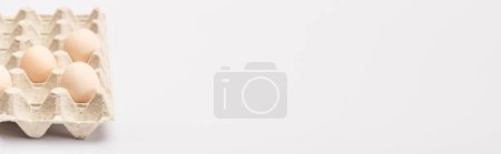 Photo for Fresh chicken eggs in cardboard egg tray on white background, panoramic shot - Royalty Free Image