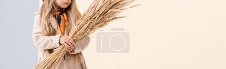 Photo for Cropped view of fashionable blonde girl in autumn outfit with wheat spikes on beige and white background, panoramic shot - Royalty Free Image