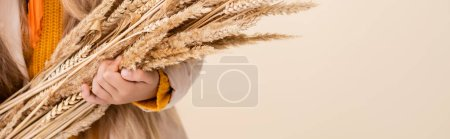 Photo pour Cropped view of fashionable blonde girl in autumn outfit holding wheat spikes isolated on beige, panoramic shot - image libre de droit