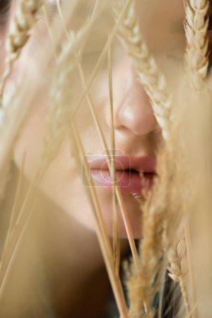 primer plano de la mujer cerca de espiguillas de trigo en primer plano borroso