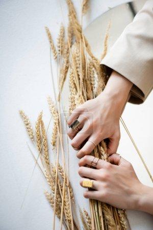 Photo pour Vue recadrée des mains féminines avec des anneaux d'or sur les doigts tenant le bouquet de blé sur blanc - image libre de droit