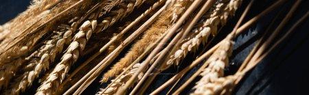 Photo pour Gros plan des épillets de blé mûr sur gris foncé, bannière - image libre de droit
