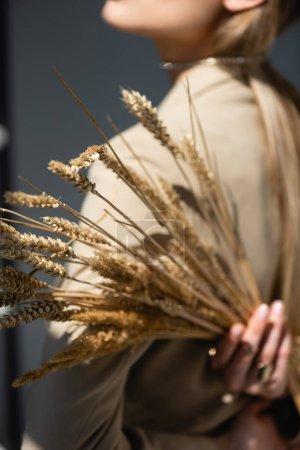 Photo pour Épillets de blé mûr avec femme sur fond flou et gris foncé - image libre de droit