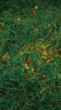 Photo for Fall foliage, Autumn grass in leaves, Topview - Royalty Free Image