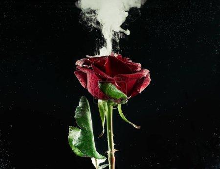 vue rapprochée de la belle fleur rose rouge et blanche encre abstraite sur fond noir