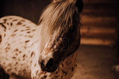selective focus of beautiful pony in standing stall at zoo