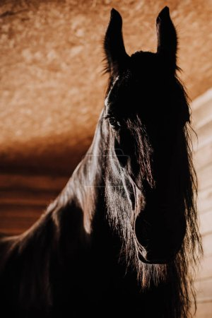selective focus of beautiful horse in standing stall at zoo