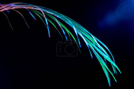one tropical palm leaf, isolated on black