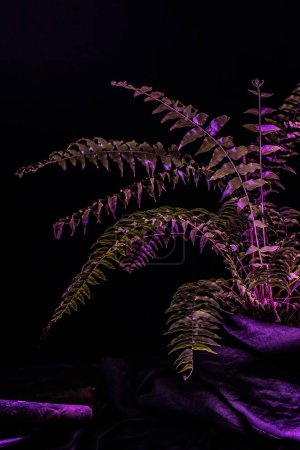 toned image of fern plant, on black background