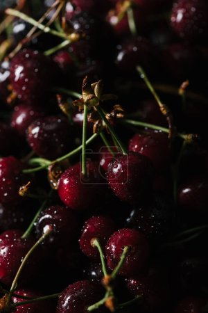 close-up view of fresh ripe sweet cherries with water drops