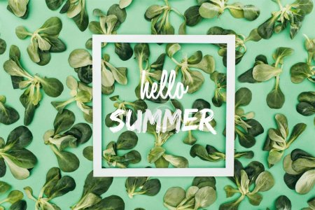 top view of white square frame with words hello summer and beautiful fresh green leaves on green