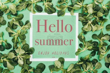white frame with words hello summer, enjoy holidays and fresh green leaves on green
