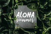 card with words Aloha Summer, water drops and fresh green leaves