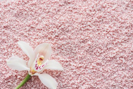top view of beautiful white orchid flower and pink sea salt background