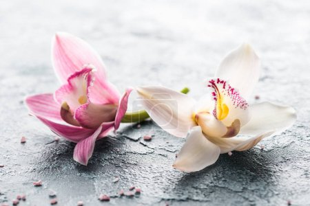 close-up view of beautiful pink and white orchid flowers and sea salt