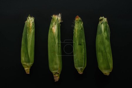 flat lay with arranged raw fresh corn cobs isolated on black