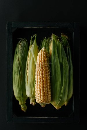 top view of raw fresh corn cobs in wooden box isolated on black