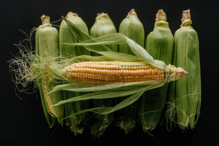 Photo for Flat lay with arranged raw fresh corn cobs isolated on black - Royalty Free Image