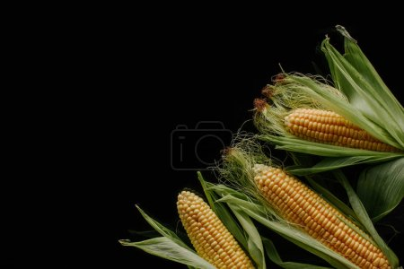 flat lay with arranged fresh ripe corn cobs isolated on black