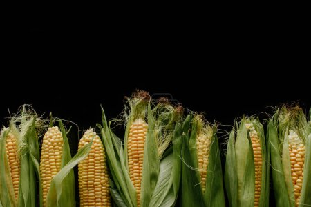 Photo for Top view of arrangement of fresh corn cobs isolated on black - Royalty Free Image