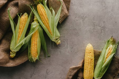 flat lay with ripe corn cobs on sack cloth on grey concrete tabletop