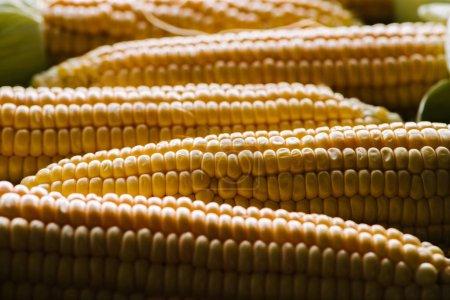 Photo pour Vue rapprochée des épis de maïs cru comme toile de fond - image libre de droit