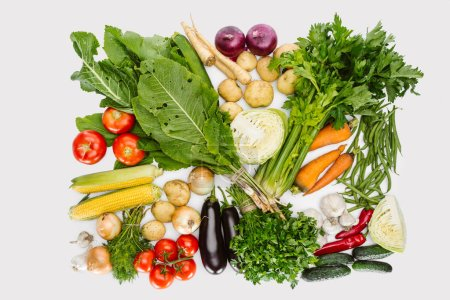 flat lay with various autumn vegetables arranged isolated on white